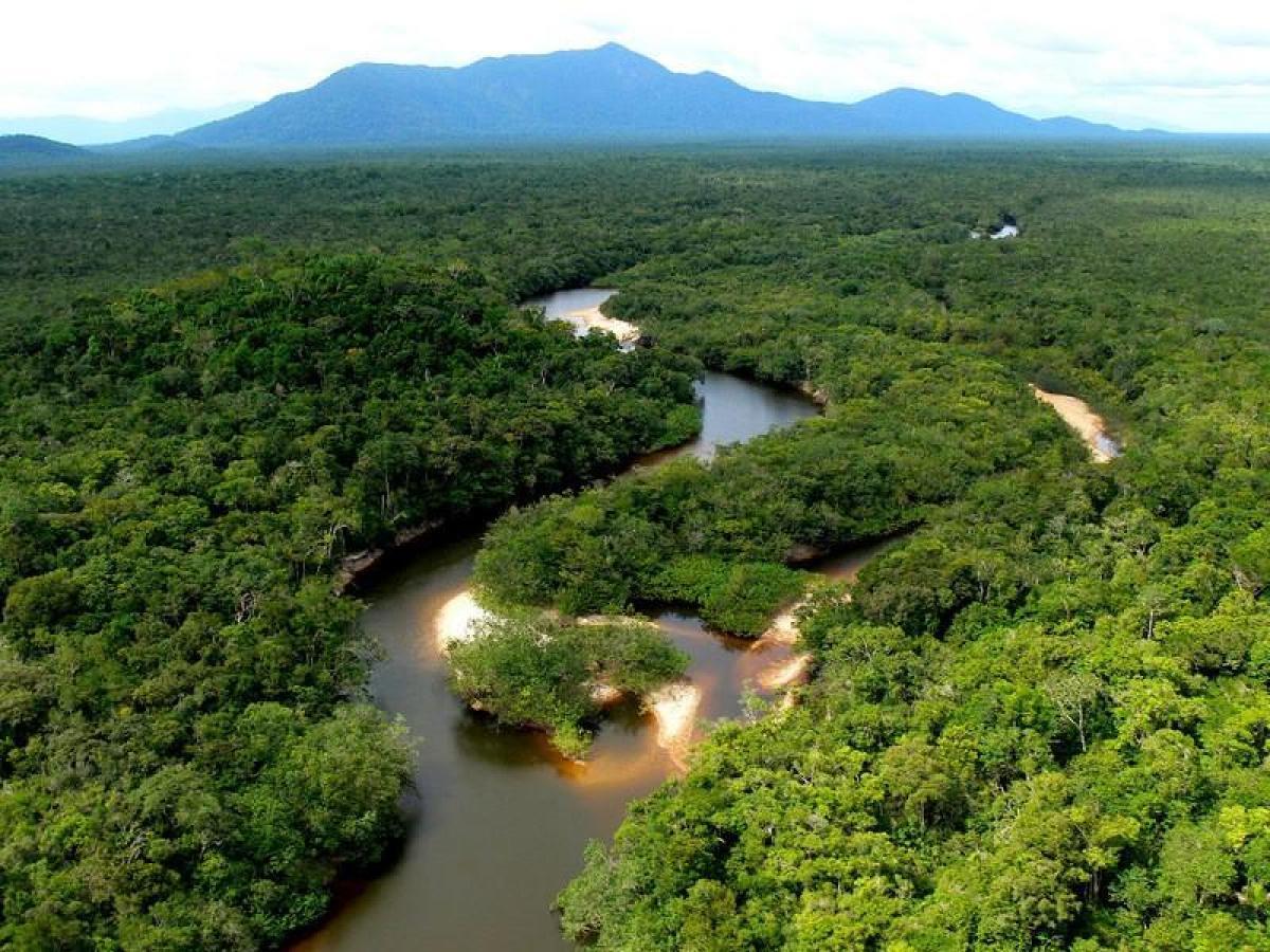 Faune, flore amazonie : poissons, piranhas, dauphin, anaconda Photo de l amazonie