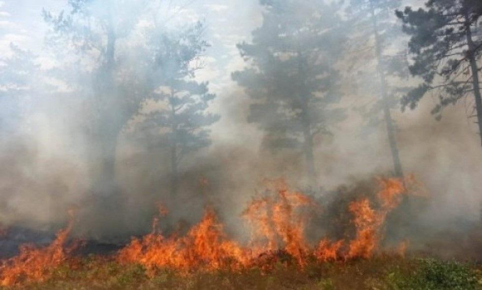 სვანეთის ტყეში ცეცხლის ახალი კერები გაჩნდა