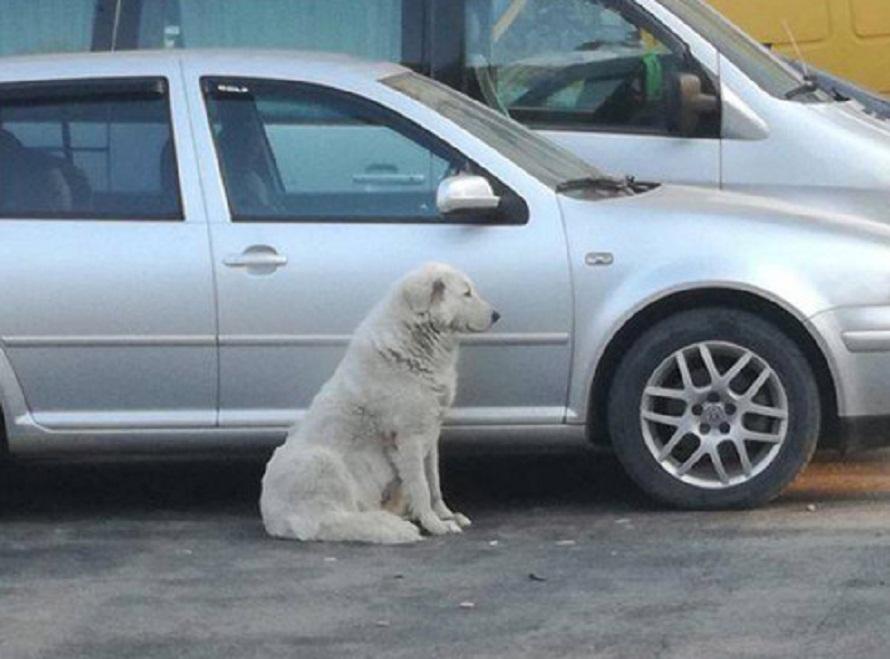 ბათუმში ძაღლი 4 დღეა სავარაუდოდ პატრონს ელოდება