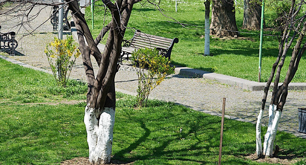 თბილისის ტერიტორიაზე არსებულ ხეებს საერთაშორისო ექსპერტები შეისწავლიან