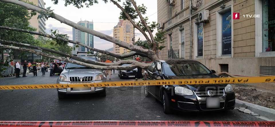 თბილისში, თამარაშვილზე ავტომობილებს ხე დაეცა