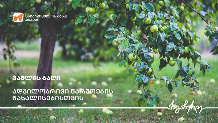 საქართველოს ბანკის ფინანსური მხარდაჭერით გორში ვაშლის ბაღები გაშენდა