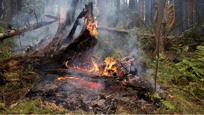 ლაგოდეხის ტყეში გაჩენილი ხანძარი ლიკვიდირებულია