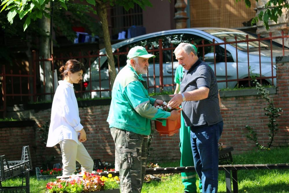ძმები ზუბალაშვილების ქუჩაზე გამწვანების ღონისძიება მოეწყო