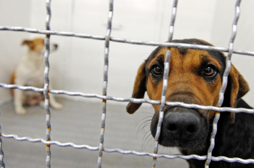 100-მდე ძაღლი მოკლეს და აწამეს, არავინ დასჯილა – თამაზ ელიზბარაშვილის თავშესაფარი განცხადებას ავრცლებს