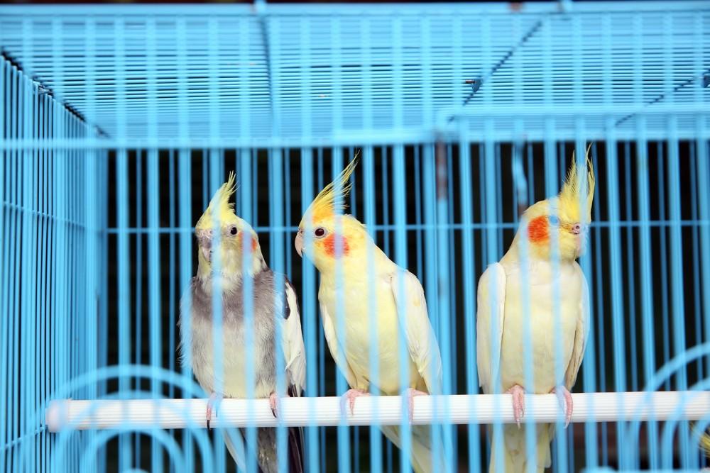 ცხოველთა მონიტორინგის სააგენტომ ცხოველების ბაზრობაზე ცხოველთა მოვლა-პატრონობის პირობები შეამოწმა