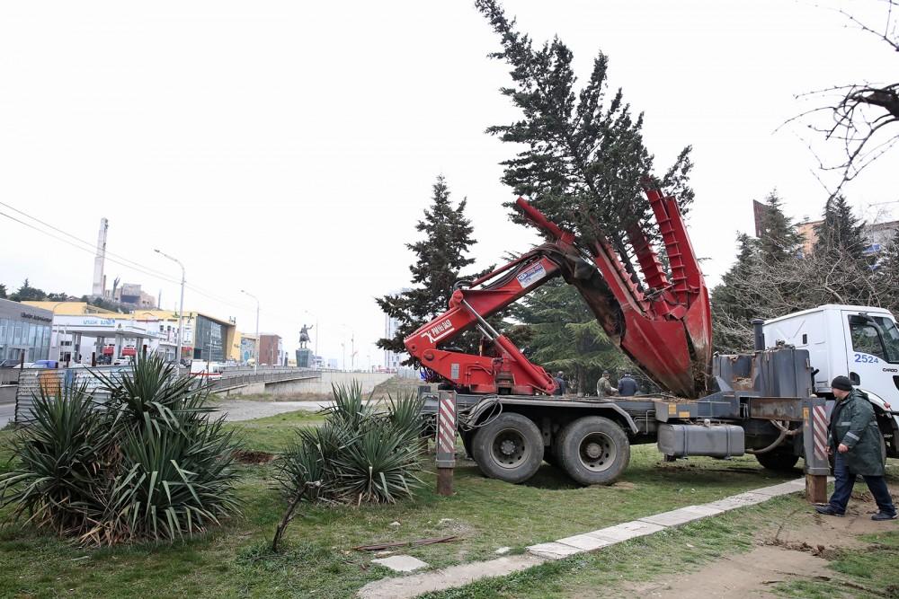 გელოვანის გამზირზე, კალათბურთის მოედნის მშენებლობის ადგილიდან ხე-მცენარეები გადაირგო