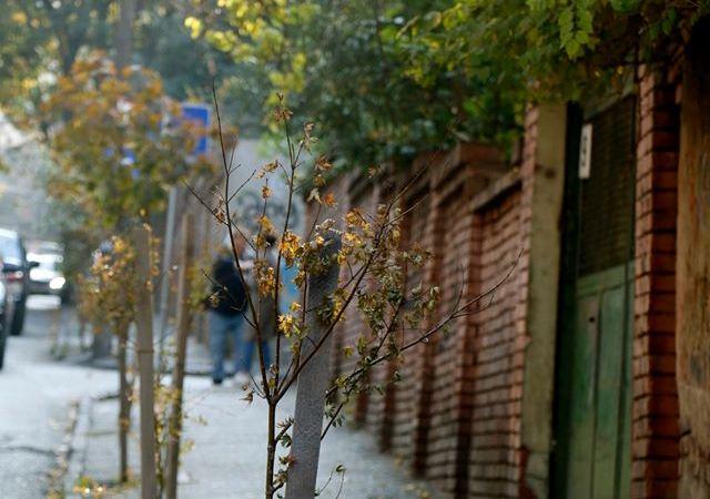 მთაწმინდის რაიონის გამგეობამ რამდენიმე ქუჩაზე გამწვანების სამუშაოები ჩაატარა