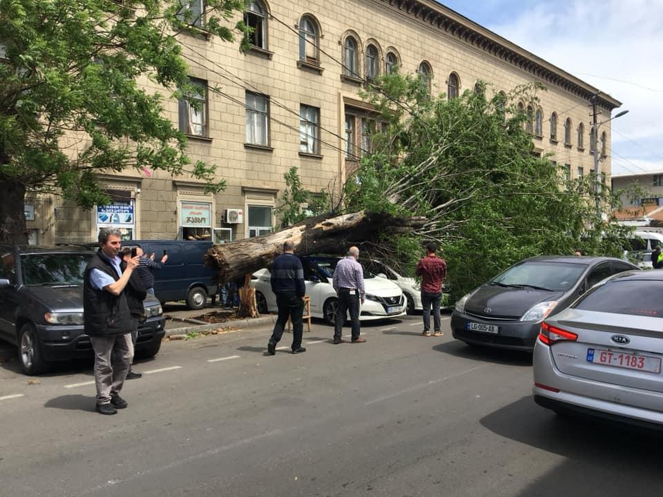 თბილისში ქარმა ხე წააქცა - დაზიანებულია ავტომობილები