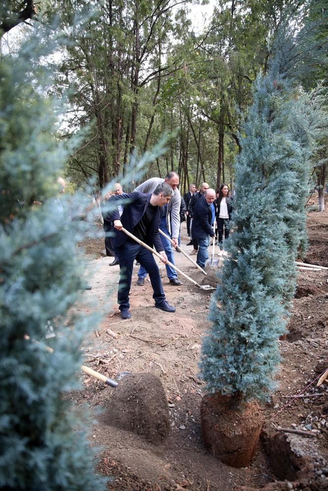 ხის დარგვის საერთაშორისო დღესთან დაკავშირებით ვასო გოძიაშვილის სახელობის ბაღში ხეები ირგვება