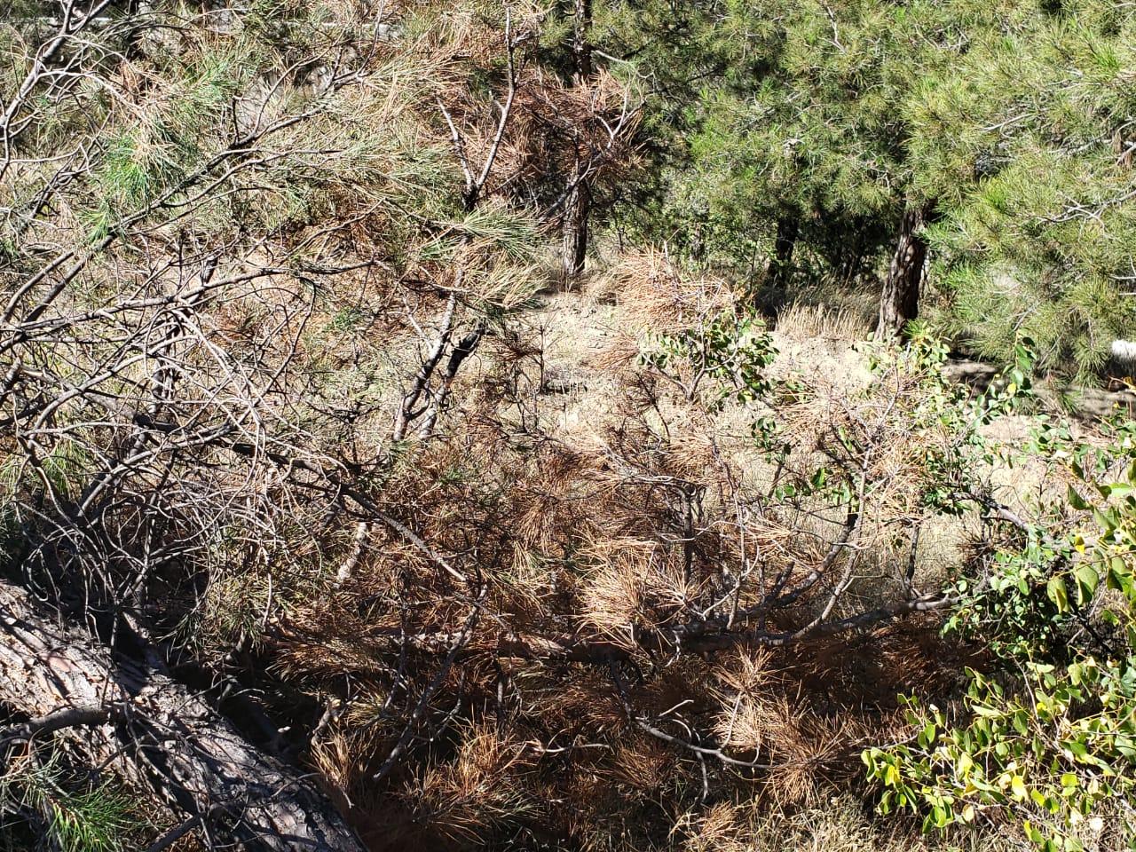 საბურთალოს რაიონში დაავადებული ხეების სანიტარიული ჭრები განხორციელდა