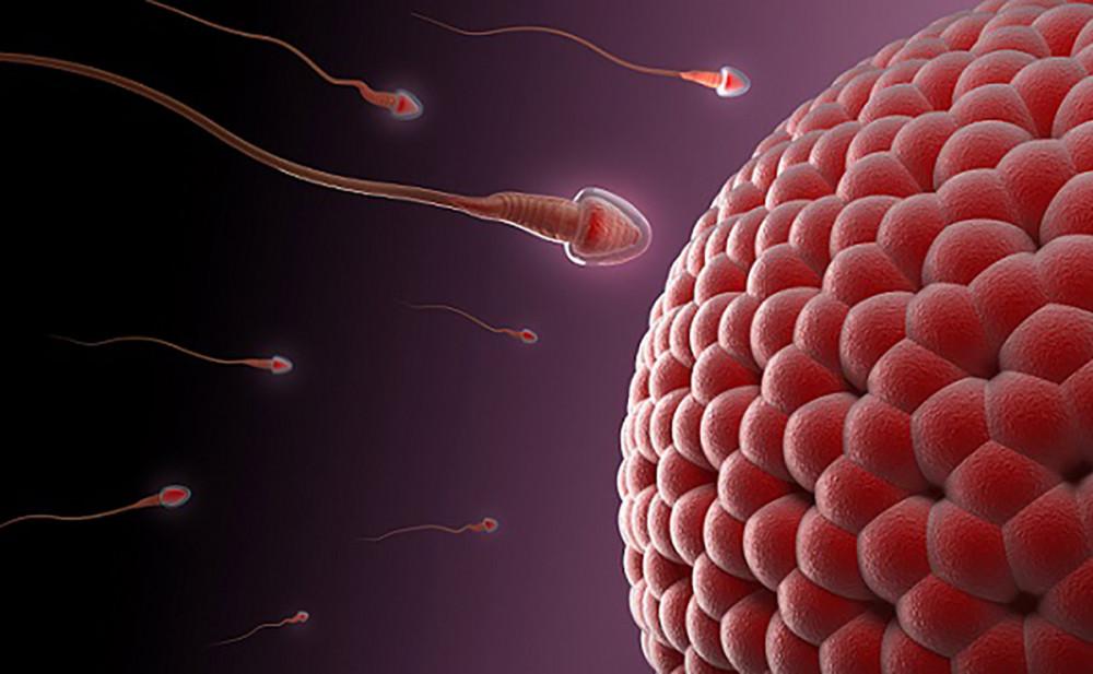 კორონავირუსი შესაძლოა სპერმის ხარისხზე მოქმედებდეს