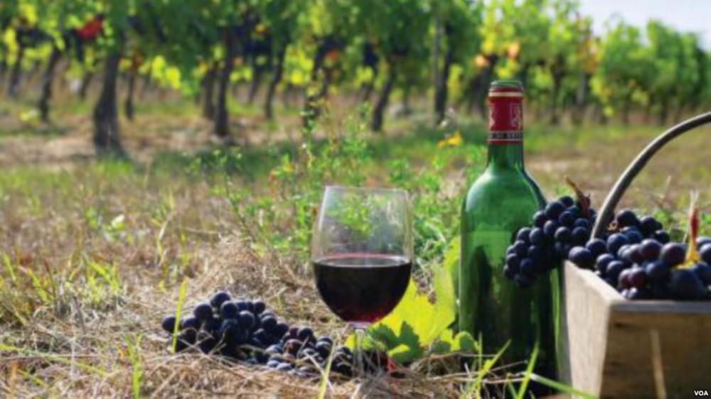 ქართული ღვინო გინესის რეკორდების წიგნში შევიდა