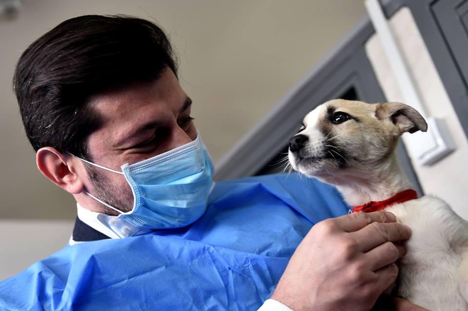 იქნებ უპატრონო ძაღლების გადარჩენისთვის, ეს ფაქტი აღმოჩნდეს გადამდები სახელმწიფო მოხელეებისათვის  - ინგა გრიგოლია