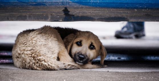 თბილისის ქუჩებში ცხოველების დახოცვის არცერთი ფაქტი არ დაფიქსირებულა -  მაია ბითაძე