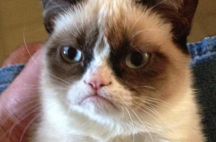 ინტერნეტ-ლეგენდა Grumpy Cat მოკვდა