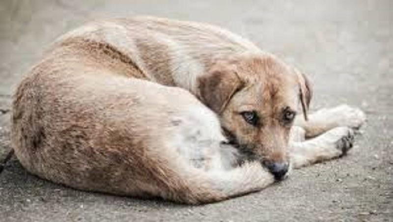 ცხოველების წამებაზე სასჯელი მკაცრდება