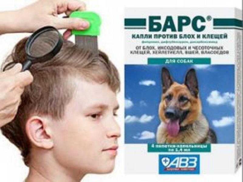 ძაღლის ანტიპარაზიტული პრეპარატის ბავშვზე გამოყენების შედეგად 7 წლის ბიჭი კომაში ჩავარდა