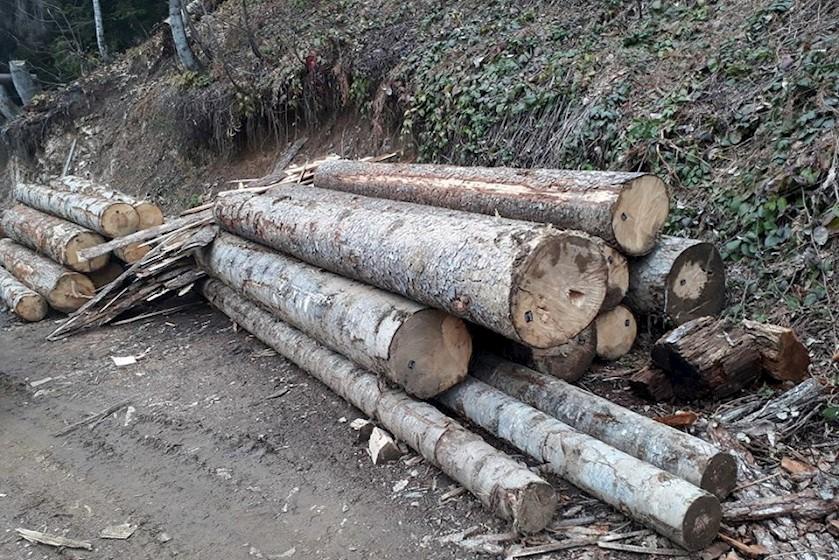 მცხეთაში ხე-ტყის უკანონო ტრანსპორტირების ფაქტი გამოვლინდა