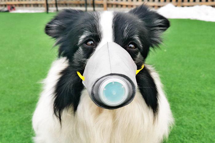 ჰონგ-კონგში ძაღლს კორონავირუსის მსუბუქი ფორმა დაუდგინდა