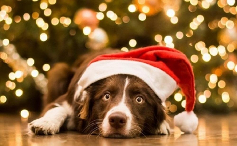 როგორი ჩაცმულობით შევხვდეთ ძაღლის წელს